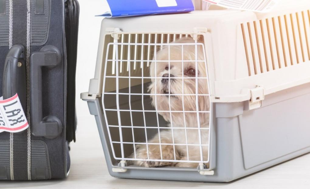 Como levar animais de estimação no voo?