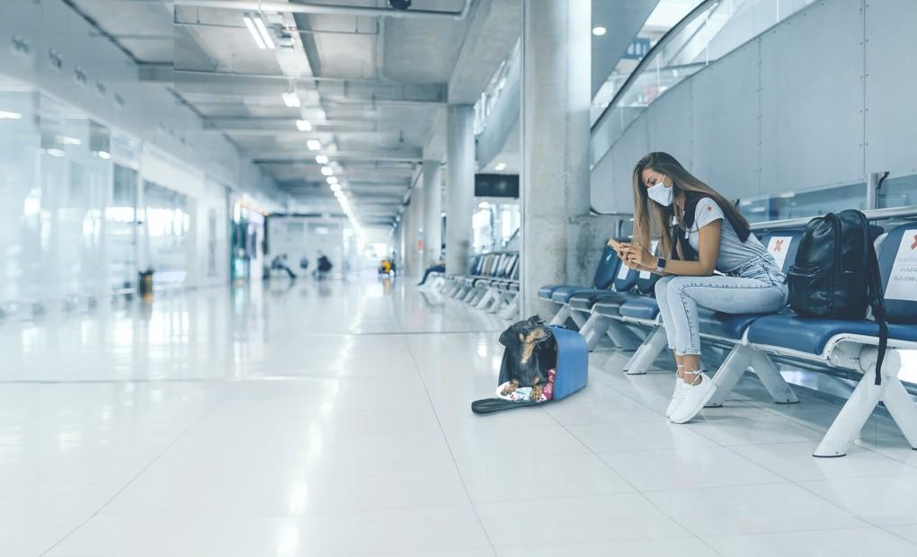Viagem de avião com seu pet