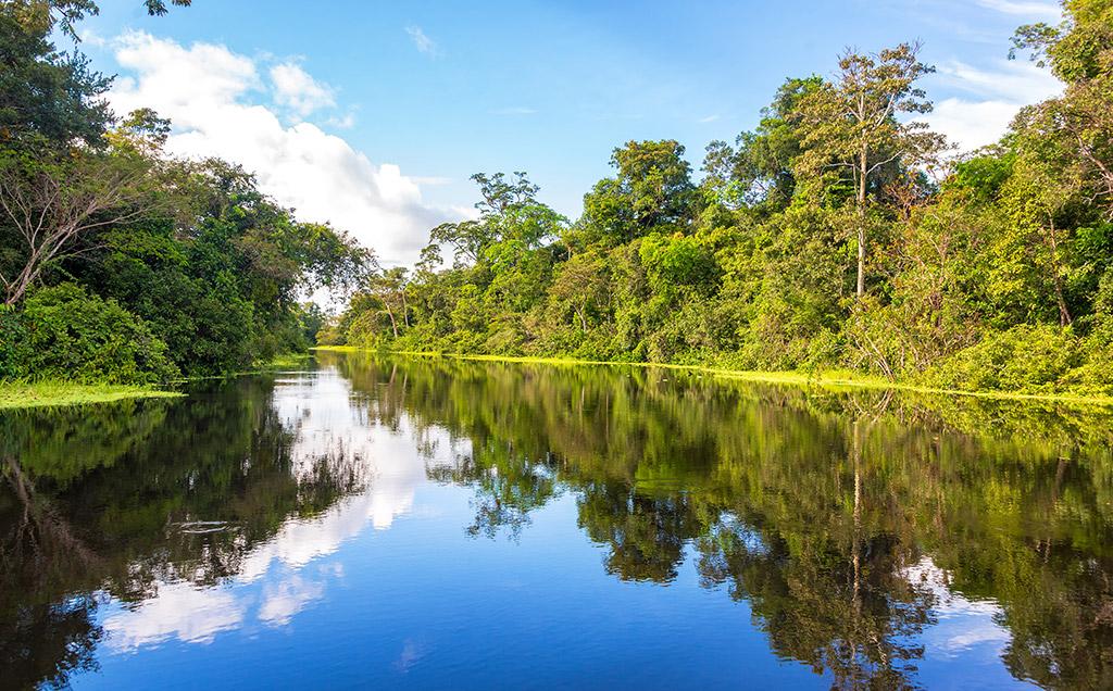 Leito do rio na floresta amazonica
